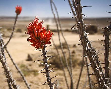 Desert Beauty 1 by Michael Carrigan