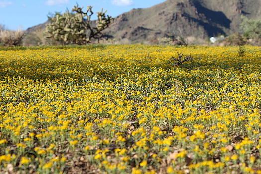 Desert beauty  by Deanne  Chapman