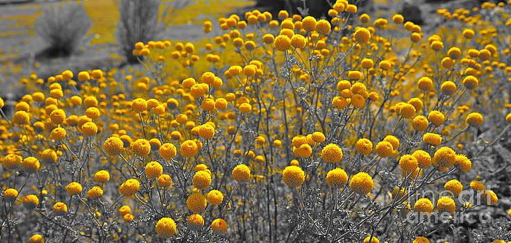 Tracey McQuain - Desert Blooms