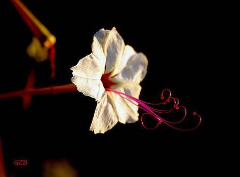 Desert Blossom by Ken  Myers