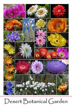 Desert Botanical Garden by Cindy McDaniel