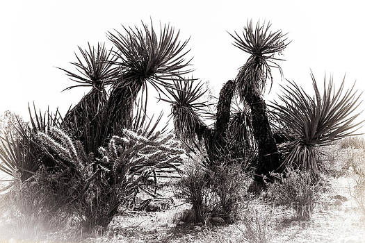 Desert Cactus by Brenda Giasson
