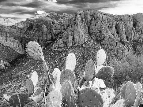 Desert Prickly Pear Cactus by Jen Lynn Arnold