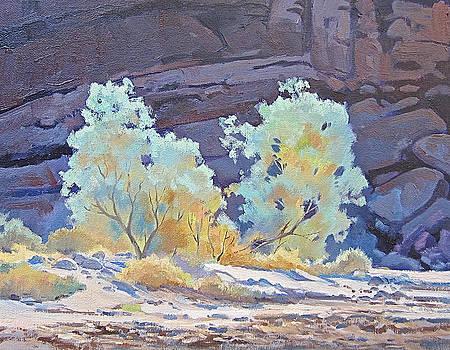Desert Contrasts by Lynne Fearman