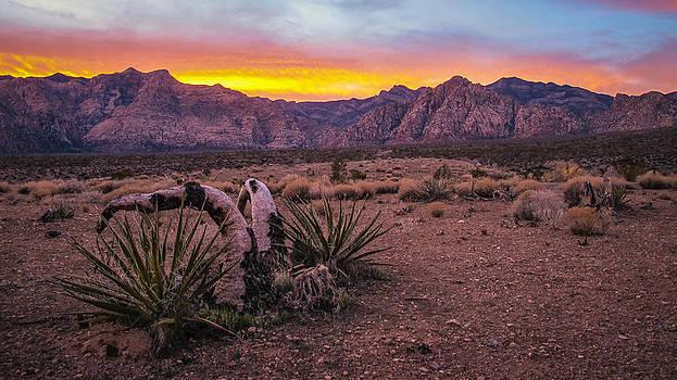 Desert Dance by Anthony J Wright
