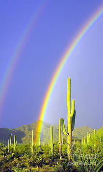 Douglas Taylor - DESERT DOUBLE RAINBOW - LEFT