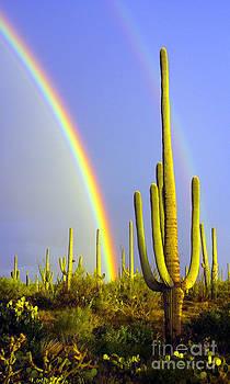 Douglas Taylor - DESERT DOUBLE RAINBOW - RIGHT