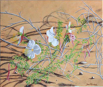 Desert flower by Paul Santander