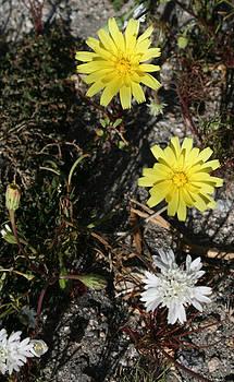 Desert Flowers 10 by Gordon Larson