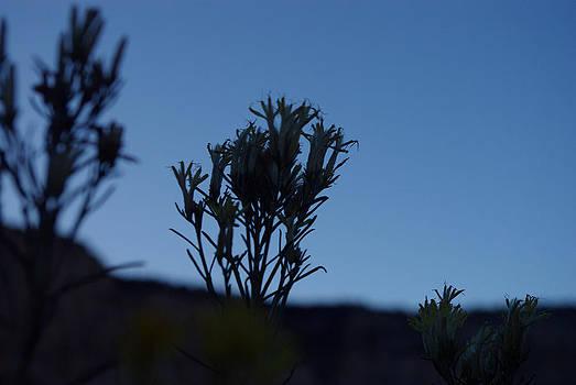 Desert Flowers at Dusk by Justyne Moore
