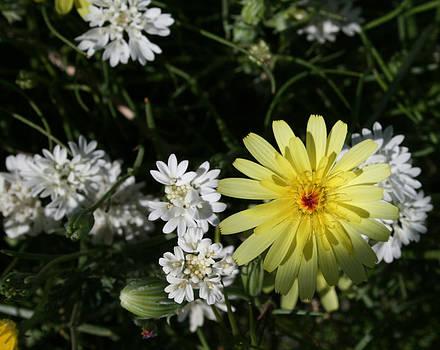 Desert Flowers8 by Gordon Larson