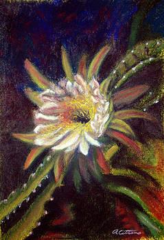 Desert Gift Orchid Cactus  Pastel by Antonia Citrino