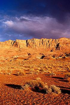 Desert Golden Light by T C Brown