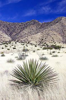 Douglas Taylor - DESERT GRASSLAND - DRAGOON MOUNTAINS