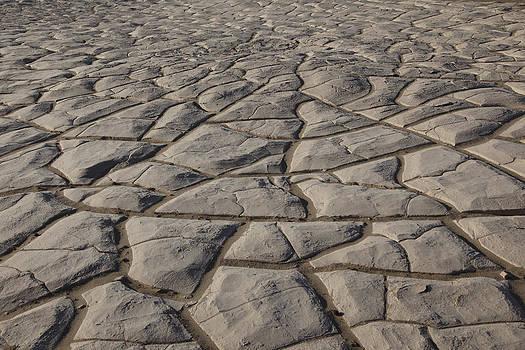 Susan Rovira - Desert Hardpan Mesquite Dunes