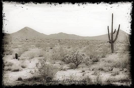 Desert heat by Tina Hannaford