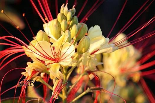 Desert in Bloom by Ken  Myers