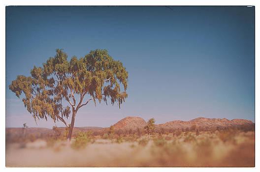 Eucalyptus at the McDonald Ranges by Ross Carroll