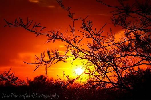 Desert Pass Sunrise by Tina Hannaford