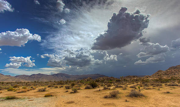 Desert Rains by Jackie Novak