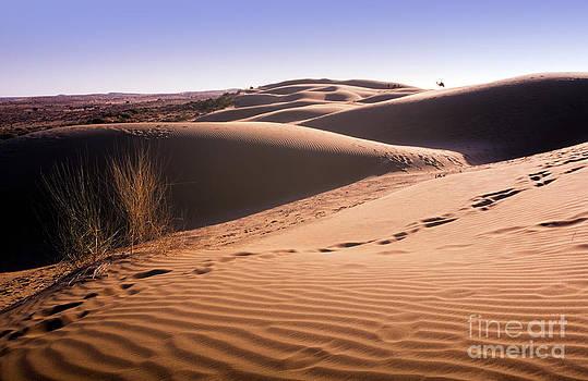 Tim Hester - Desert Sand Dune