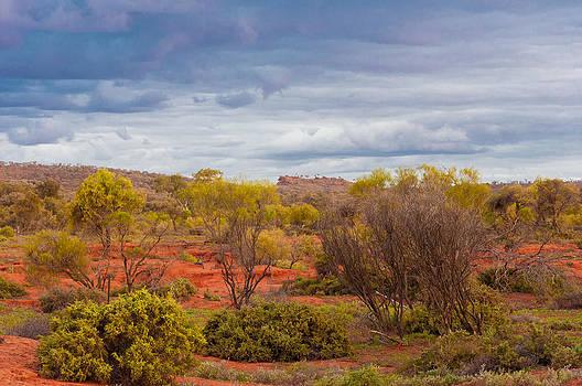 Desert Scrub by Ross Carroll