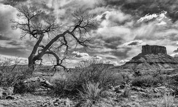 Desert Soul by Jeff R Clow