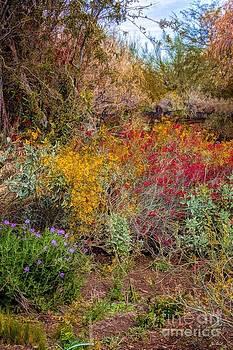 Jon Burch Photography - Flowering Desert