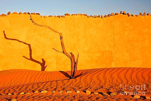 Kate McKenna - Namibia Desert Still Life