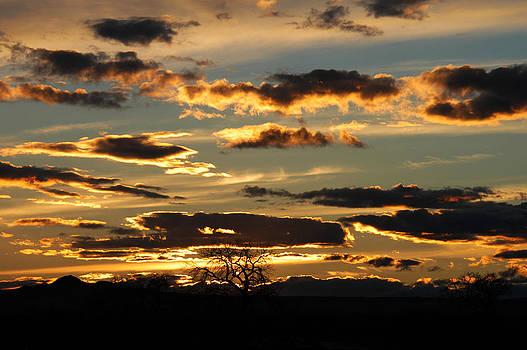 Desert Sunset with Tree by Shirin McArthur