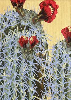 Marcia Weller-Wenbert - Desert Yellow Cactus 4