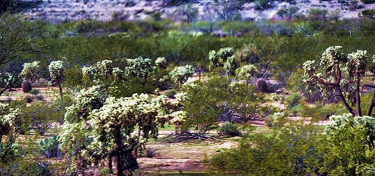 Joe Bledsoe - Desertscape Horizontal