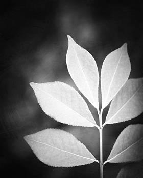 Carolyn Cochrane - Designer Leaves