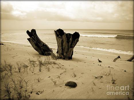 Sophie Vigneault - Desolate Beach