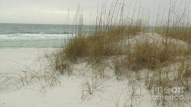 Dest Fla Beach Dunes by Craig Calabrese