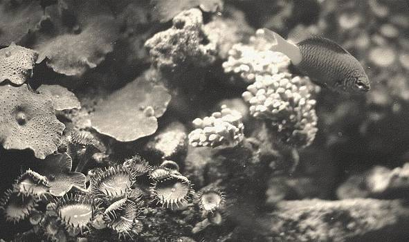 Rosemarie E Seppala - Devil Damsel Corals And Mushrooms