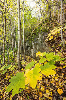 Devil's Club in Fall by Tim Newton