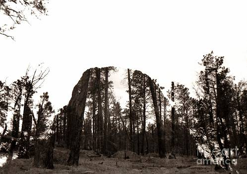 Anthony Wilkening - Devils Tower Revealed