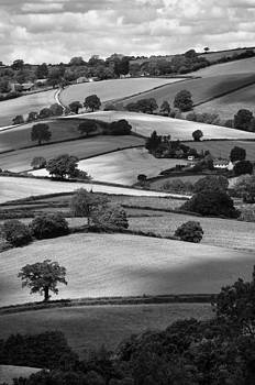 Devonshire Hillside by Michael Carter
