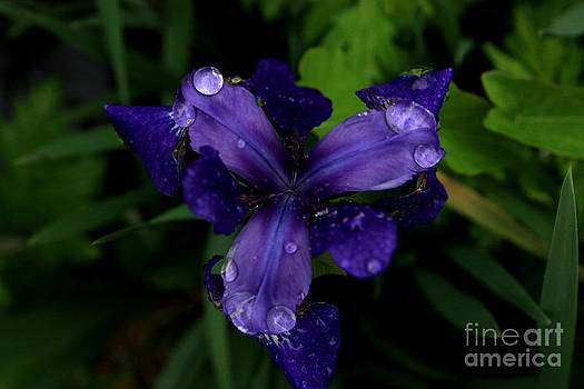 Dew Drops by Sherry Grochmal