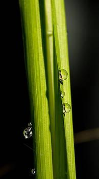 Dewdrops by Justyn  Lamb