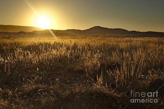 Dewy Desert by Matt Tilghman