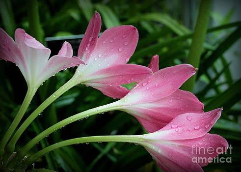 Dewy Flowers by Bren Thompson