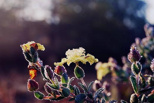Dewy Morn' by Kristy Richie