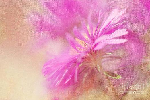 Lois Bryan - Dewy Pink Asters
