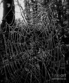 Dewy Web by Frances Hodgkins