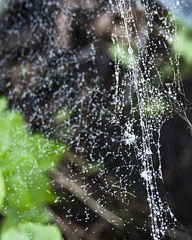 Dewy Web by Kate Johnson