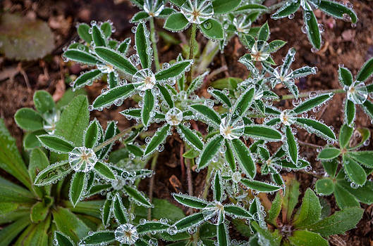 Diamond Flowers by Kelly Kitchens