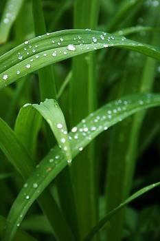 Robin Mahboeb - diamond rain