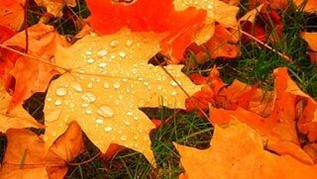 Dieing Leaves Need Water by Dan Olszewski